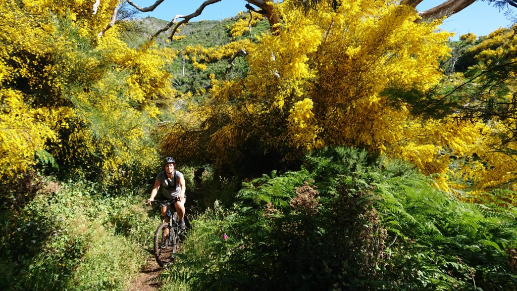 Mountain Bike Madeira